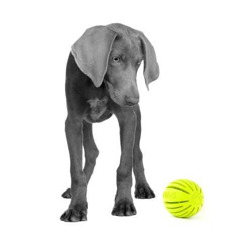 Holobal Stylish Fun And Durable Rubber Toys Fido Friendly