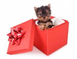 Dogin box