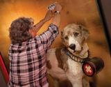 Rescue dog from the 1800's receives recognition, and gets exhibition of his own.