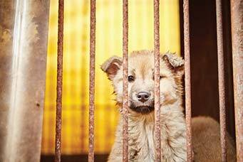 South Korea is the only country known to have established large intensive farming systems to supply the demand for dog meat