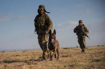 Dogs Take on War with Rhino Poachers in Africa.