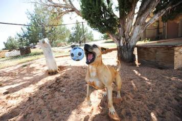 Best Friends Animals Sanctuary