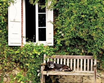 Adventures in Pet Sitting: Woofs & Wine in the South of France