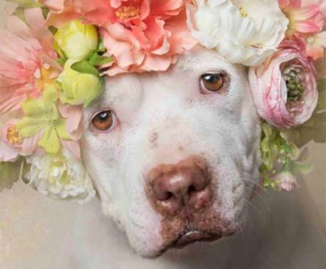 Pit Bull with Floral Crown