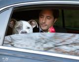 Lorenzo & Titan canine rose ceremony