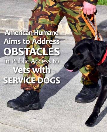 Veteran and service dog