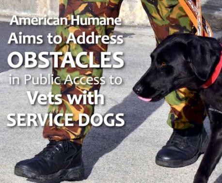 Vets and Service Dogs