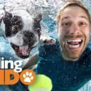 Finding Fido TV Host Seth Casteel
